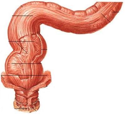 直腸A.JPG