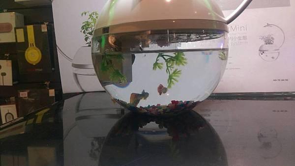 香草與魚1