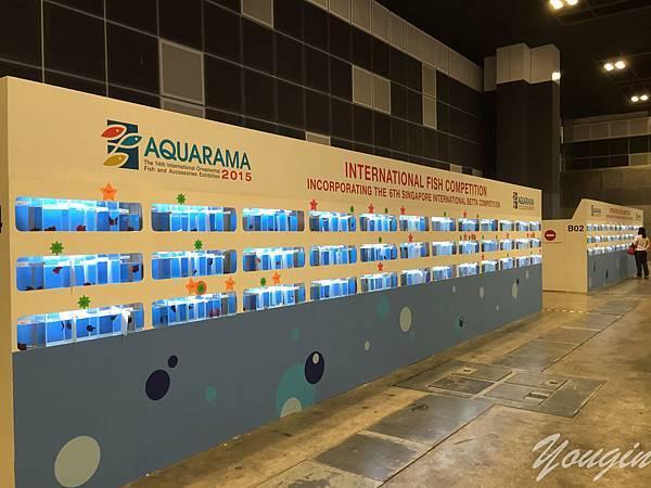 2015 aquarama 11