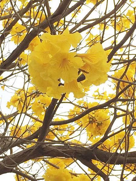 彰化賞花季