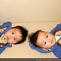 我們是雙胞胎兄弟,你看像不像?.jpg