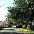20160202_西雅圖第二天參觀景點,美麗的湖濱公園。西雅圖第二天參觀景點,美麗的湖濱公園。-14去公園的沿路可見綠蔭滿眼,實在是不錯的居住環境,天天都能森呼吸。.jpg