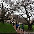 20160203_西雅圖第3天弟弟加入我們的行列,去姐姐見習的華盛頓大學參觀。校園風景。-8.jpg