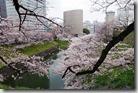 東京千鳥之淵的櫻花2016.04.01-2