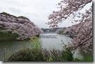 東京千鳥之淵的櫻花2016.04.01-9