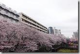 2016.04.02早上第三個行程--目黑川的櫻花。