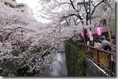 2016.04.02早上第三個行程--目黑川的櫻花。-13