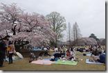 2016.04.03新宿御苑。今天天氣很好,又是周日,可以看到櫻花樹下許多人在野餐。-3