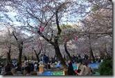 2016.04.05名古屋的鶴舞公園。-2