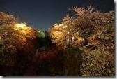 2016.04.05欣賞名古屋山崎川四季之道的夜櫻。-8