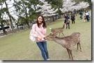 2016.04.06奈良公園餵鹿。-3