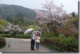 2016.04.07八阪神社、圓山公園。-10