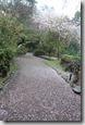 2016.04.07八阪神社、圓山公園。所謂落櫻繽紛應該就是這樣吧!
