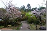 2016.04.07八阪神社、圓山公園。-13