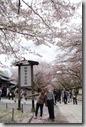 2016.04.08醍醐寺的櫻花。-36