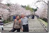 2016.04.08遊賞蹴上鐵道的櫻花。-8