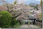2016.04.08遊賞蹴上鐵道的櫻花。-22