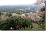 2016.04.10吉野山的櫻花。花矢倉展望台--一木千本。-3