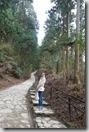 2016.04.10吉野山賞櫻。繼續往上爬,去欣賞吉野山另一種櫻花之美。-1