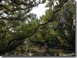 20161231_四草湖生態之旅。10