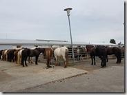 20170825_要去騎冰島馬,到馬場,天氣晴朗。