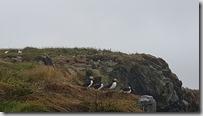 20170826_冰島國鳥