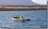 20170830_搭小船賞鯨機動性較高。