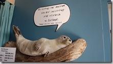 20170831_博物館內的海豹標本。