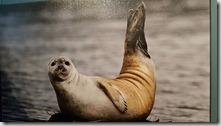 20170831_博物館內的海豹標本。1