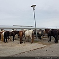 20170825_要去騎冰島馬,到馬場,天氣晴朗。.jpg
