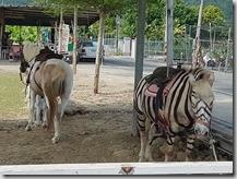 20171104_旗山美濃路上看到的馬場--真的是斑馬嗎?畫的啦!