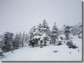 20171231_154204)山上一片白雪覆蓋2