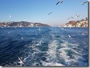 20180106_155153遊艇暢遊博斯普魯斯海峽,成群的海鷗追逐。7