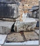 20180103_152201艾菲索斯古城53--孤獨的小貓咪
