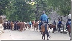 20180612_110907可可托海景區內巧遇這季節才看得到的『轉場』-轉場傳統是騎馬驅趕牛羊馬群