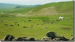 20180613_110205北疆隨處可見遍野的牛羊或是馬群。