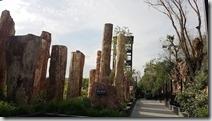 20180611_090059中國最大硅化木保護區。