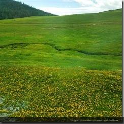 20180614_133159一路追尋滿山遍野的小黃花。