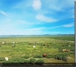 20180615_101751由布爾津往克拉瑪依,沿途可見許多風力發電機。還有隨處放牧的牛羊。