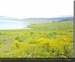 20180616_180730環賽里木湖中途休息照相。2