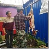 20180617_151332哈薩克民族家訪--在院子的另一角正好在殺羊。