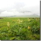 20180617_172436景區內美麗的那拉提草原。因為一直下雨,到處是霧濛濛的。看不到看不到手冊內介紹繁花織錦的莽莽草原。