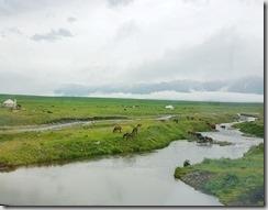 20180617_180407景區內美麗的那拉提草原。因為一直下雨,到處是霧濛濛的。還是可見隨處低頭吃草的牛羊。1