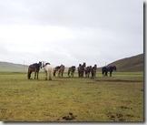 20180618_143802其中那匹馬要和我結緣啊?