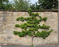 20190424_180259海德堡街上一景爬在牆上的樹