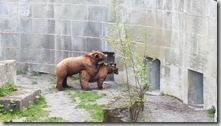 20190427_111631再走回熊公園小熊就出來見人了1