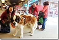20190501_081656可愛的聖伯納犬要和我們一起搭乘冰河列車