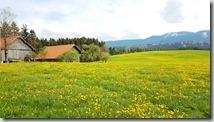 20190502_151002威斯教堂外有一大片草原,北疆沒看到的滿山遍野的小黃花,這裡看到了。1