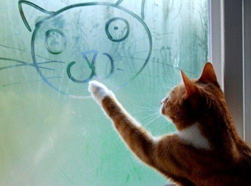 画画的猫咪[1].jpg