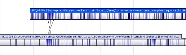 OM_Genome_comparison.png